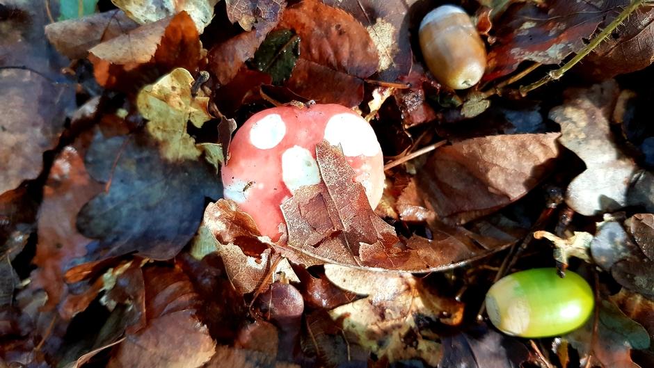 Herfst,de paddenstoelentijd komt weer aan