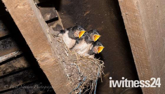 Last Swallows of Summer