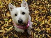 Autumn Rosie