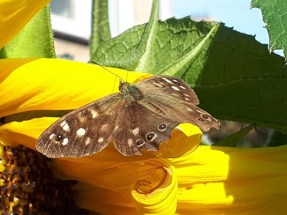 Zandoogje droogde vleugels in herfstzon.