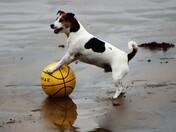 Doggy football!