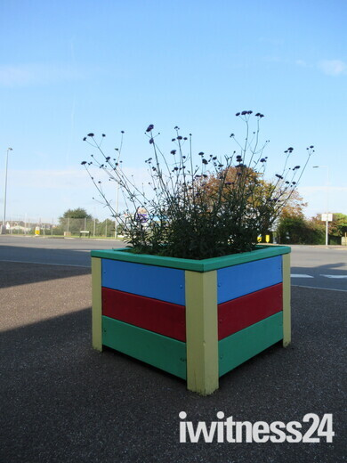 Plants in decorated plant pots in Imperial Road, Exmouth