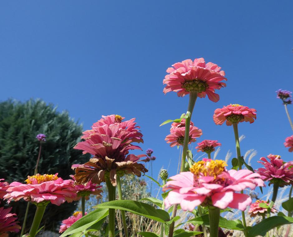 Stralend blauw, zon, bloemenpracht.