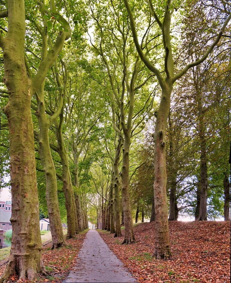 Gorinchem herfstsfeer op de Vestingwal