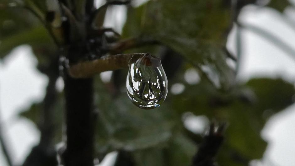 Druppel regen