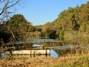 Chillesford reservoir and woods