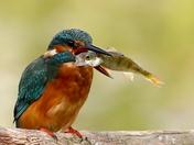 My favourite Birds taken in Suffolk through the Summer