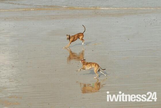 Playtime on Sheringham Beach