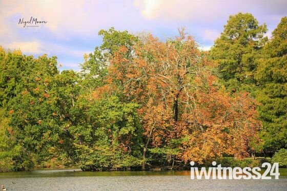 Seasons changing at Raphaels park