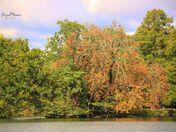 Seasons changing at Raphaels park