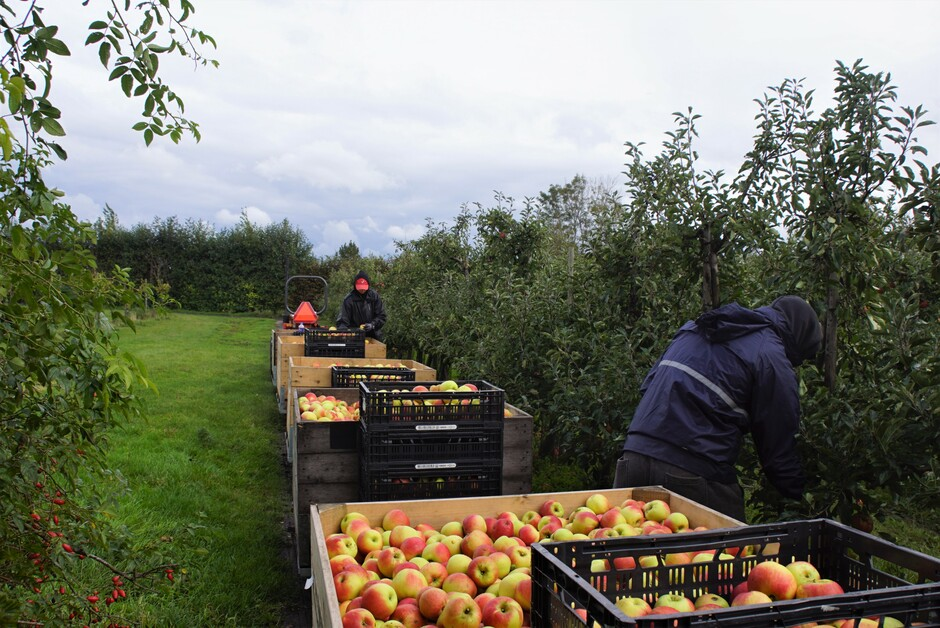 bewolkt droog 12 gr laatste appelen woerden geoogst