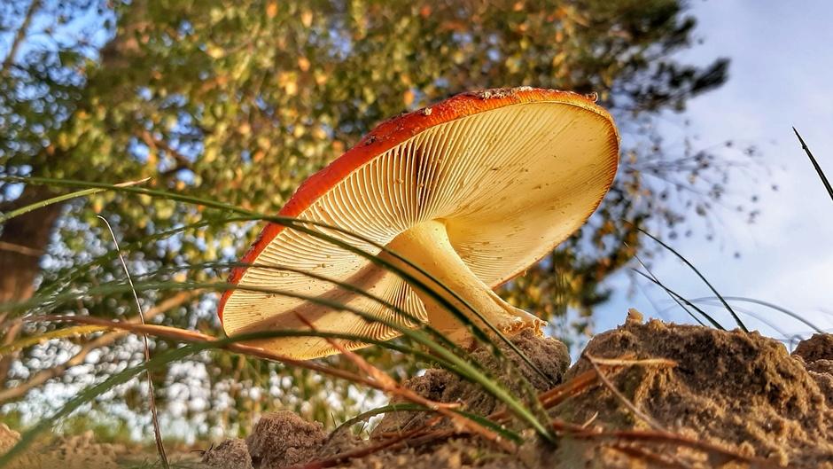 In het bos kom je ze weer allemaal tegen, paddenstoel