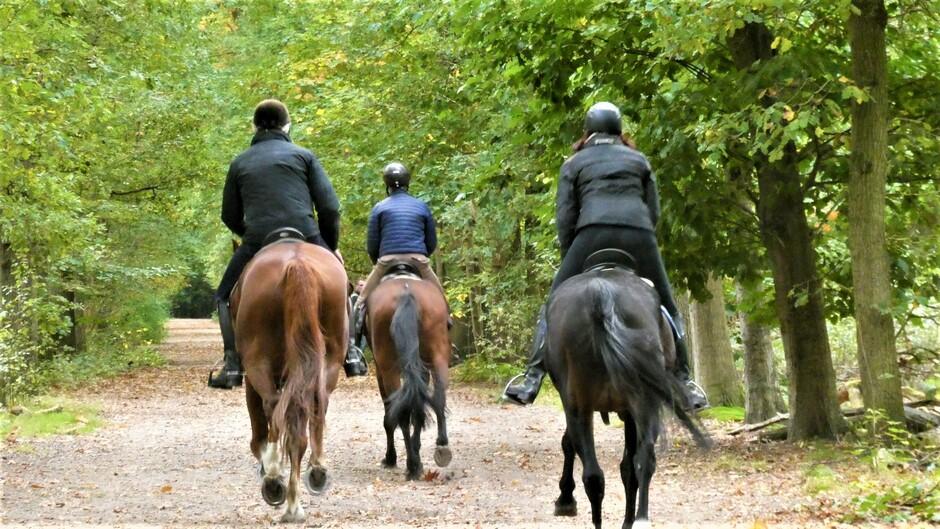 galopperende paarden door de herfstlaan