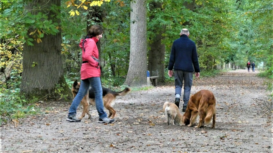 genieten van een herfstwandeling met de honden