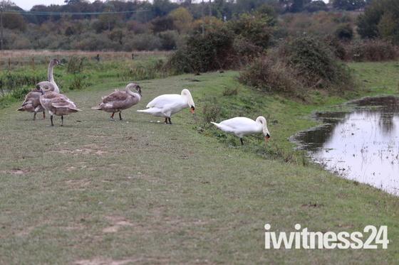 Earlham/ Bowthorpe park