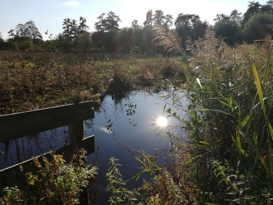 Reflectie zon in het water