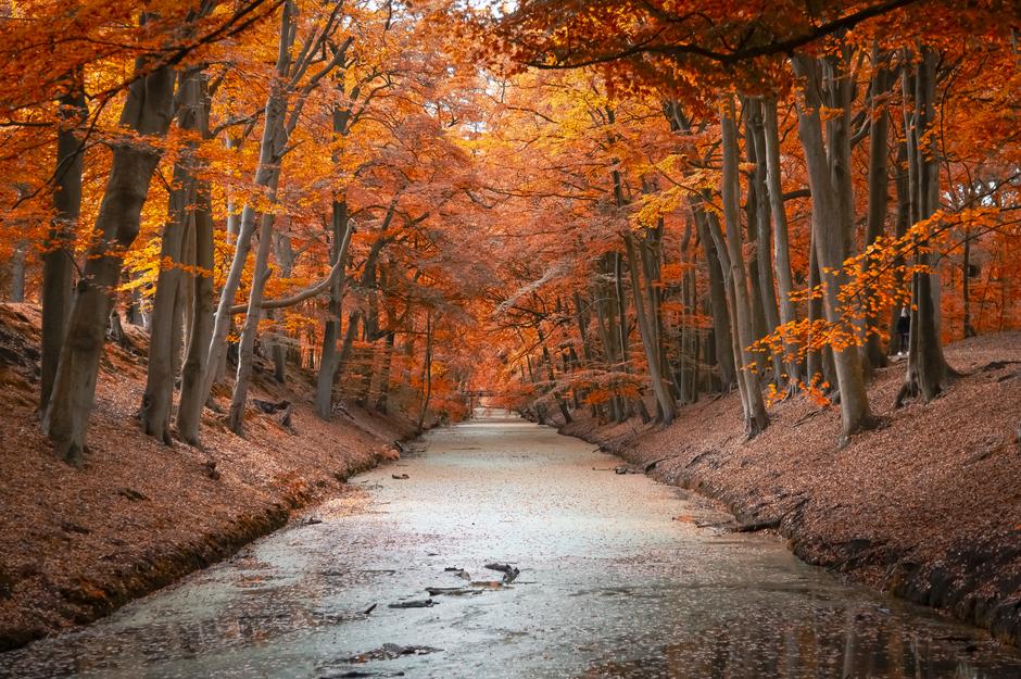 Autumn in Clingendael