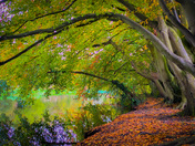 Autumn Trees over the River Bure at Horstead