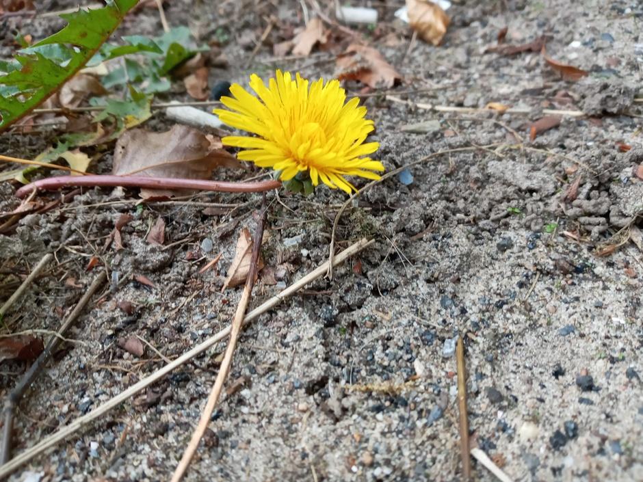 Ook nog een mooie bloem.