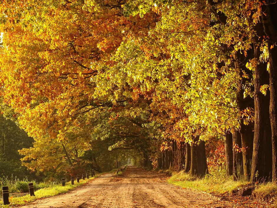 Wat is de herfst toch een prachtig seizoen!