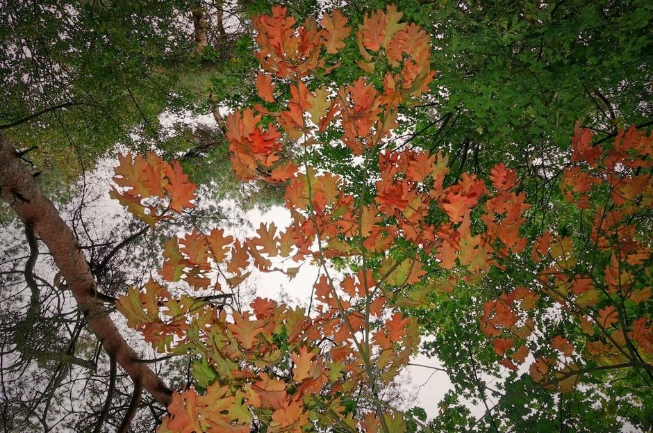 Herfstblad en nog veel groen blad met grijs weer