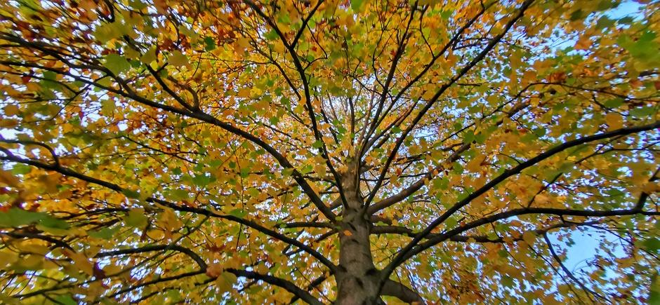 Herfstboom en blauwe lucht vanmorgen