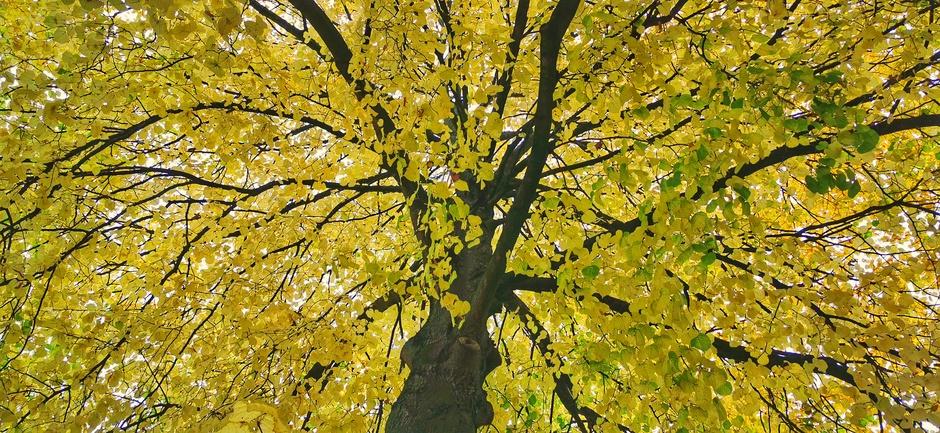 Herfstboom vanmorgen