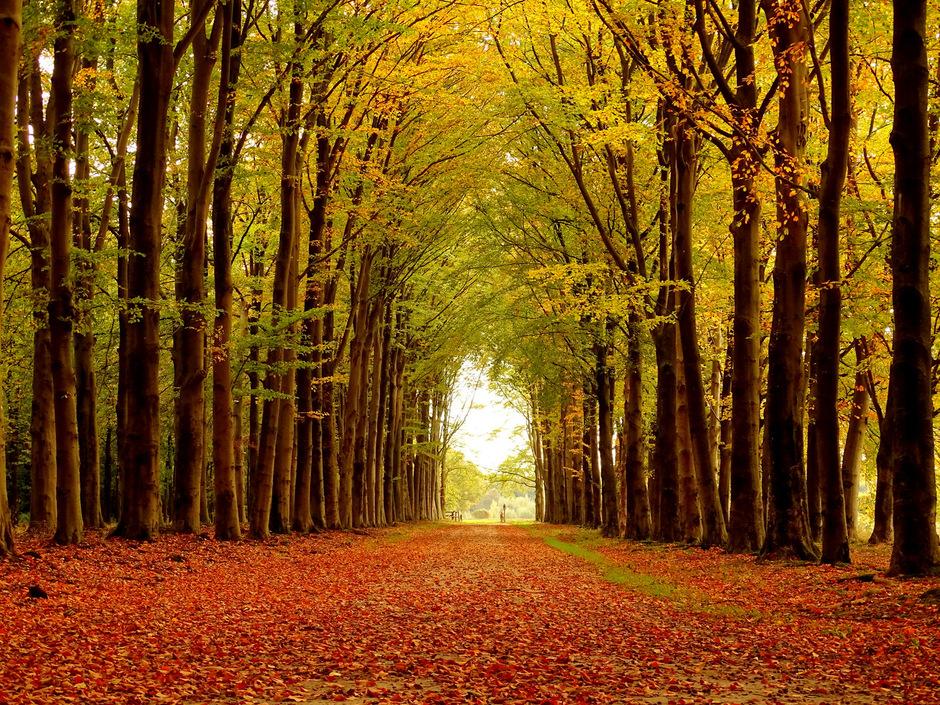 Herfst op Landgoed Eerde bij Ommen (Ov)