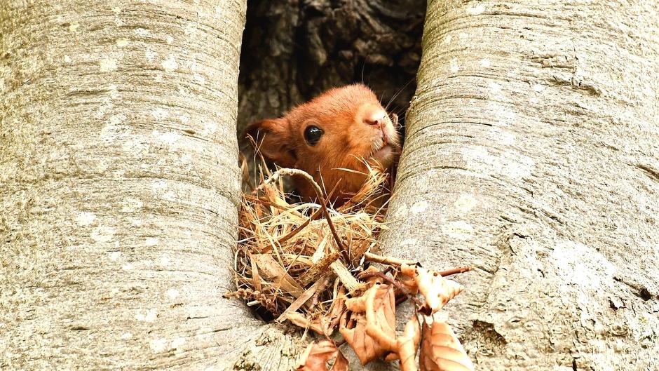 Oogcontact met dit mooie eekhoorntje