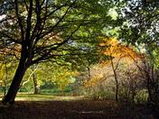 Autumn colour , Marks Hall