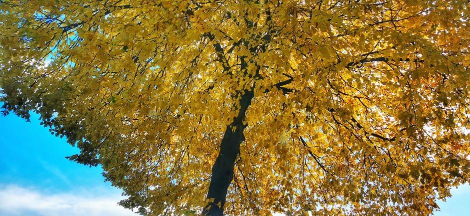 Herfst en blauw
