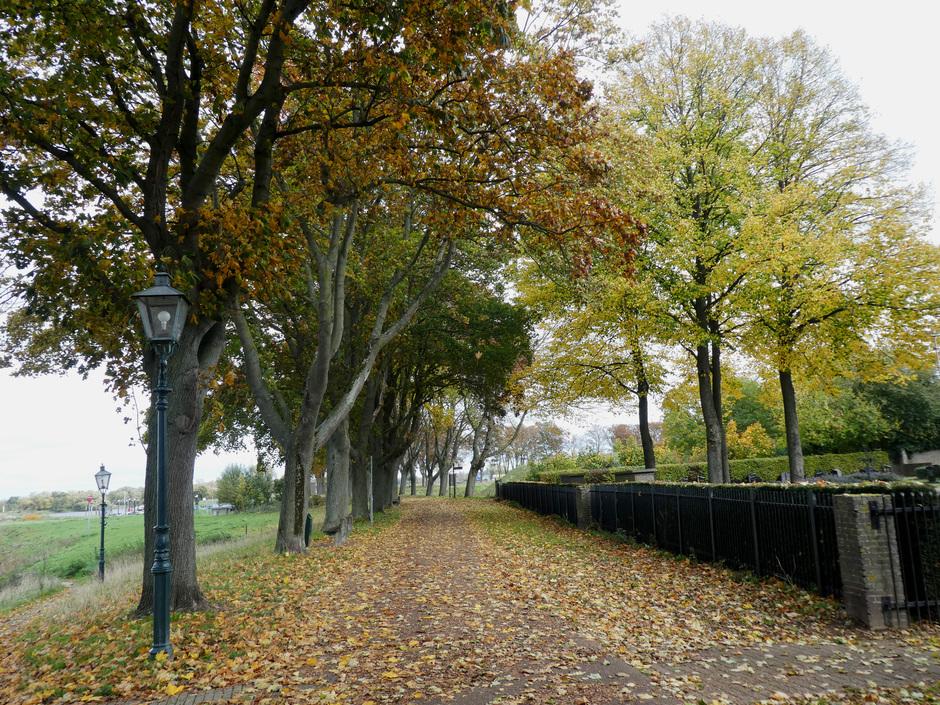 Herfst- bladeren.