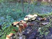 A fungi village Playford