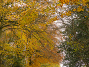 Nore Road, Portishead in autumn colours.