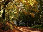 PHOTO CHALLENGE: Autumn Scenes