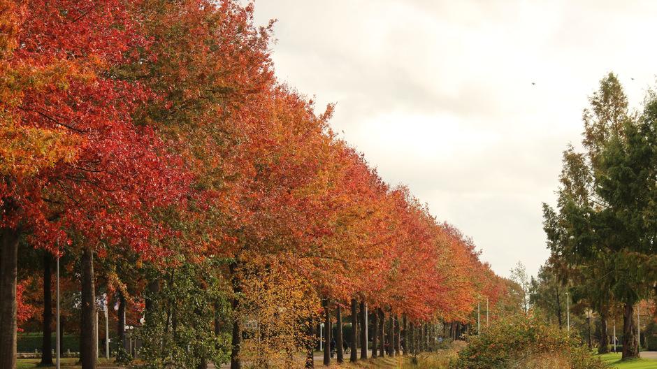 Bomen prachtig in herfstkleuren