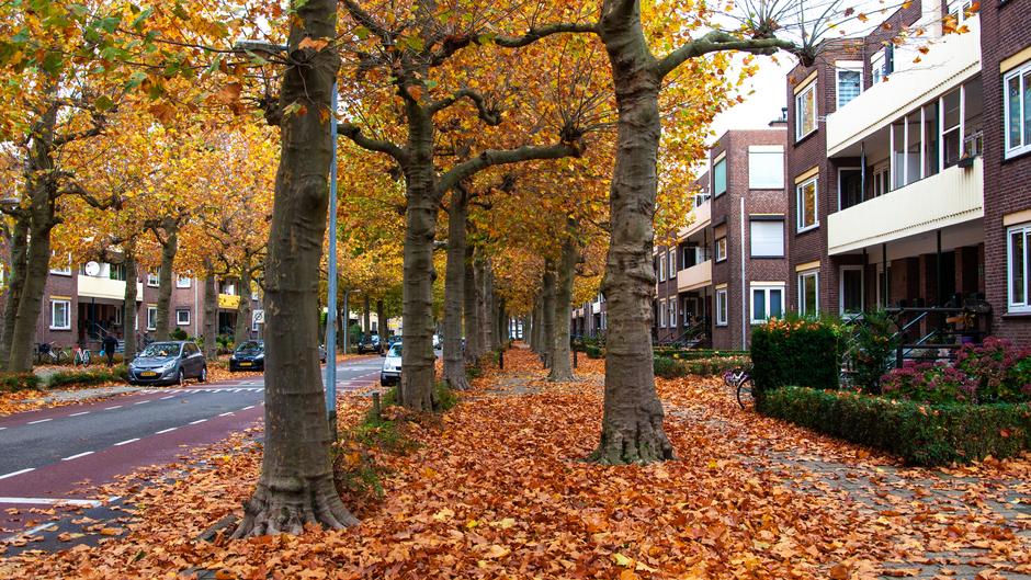 Veel bladval op straten en trottoirs