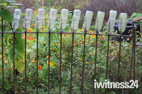 Ten clean bottles sitting on a railing in Sidmouth
