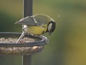 Wild birds in my garden