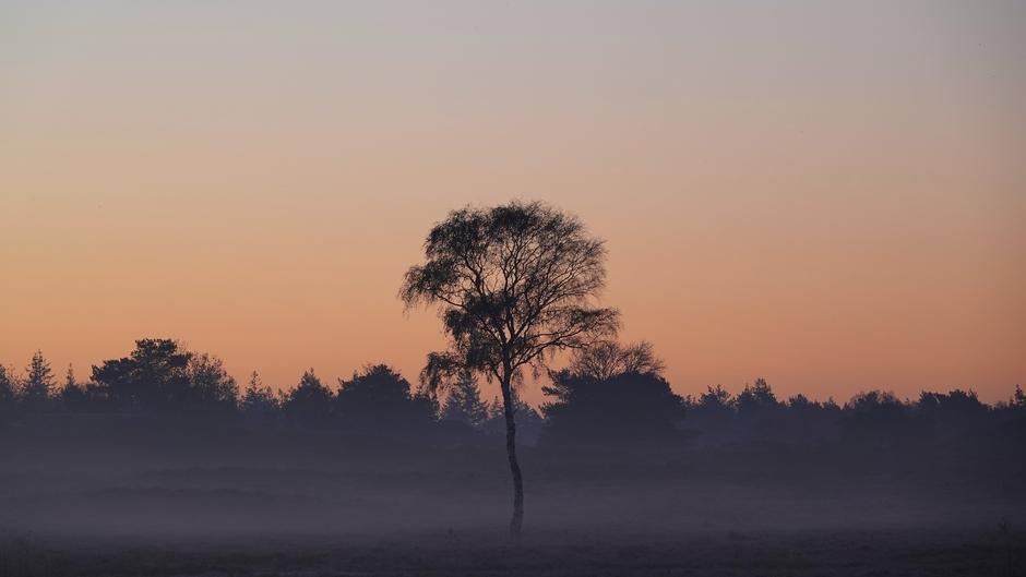 Vlak voor zonsopkomst