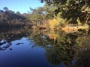 Reflections at Bystock Pools