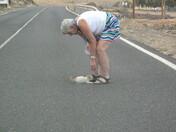 Kitten fond in road