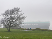 Mist at Battery Point