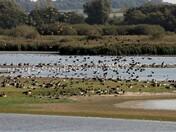 Gathering of the flocks