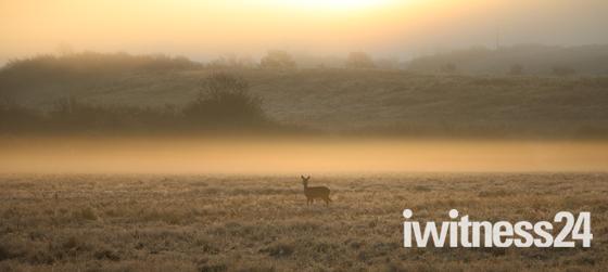 Deer In Lockdown 2