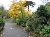 Autumn colours on trees and shruns in Manor Gardens