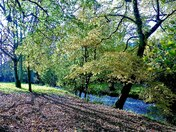 Autumn in THe Byes