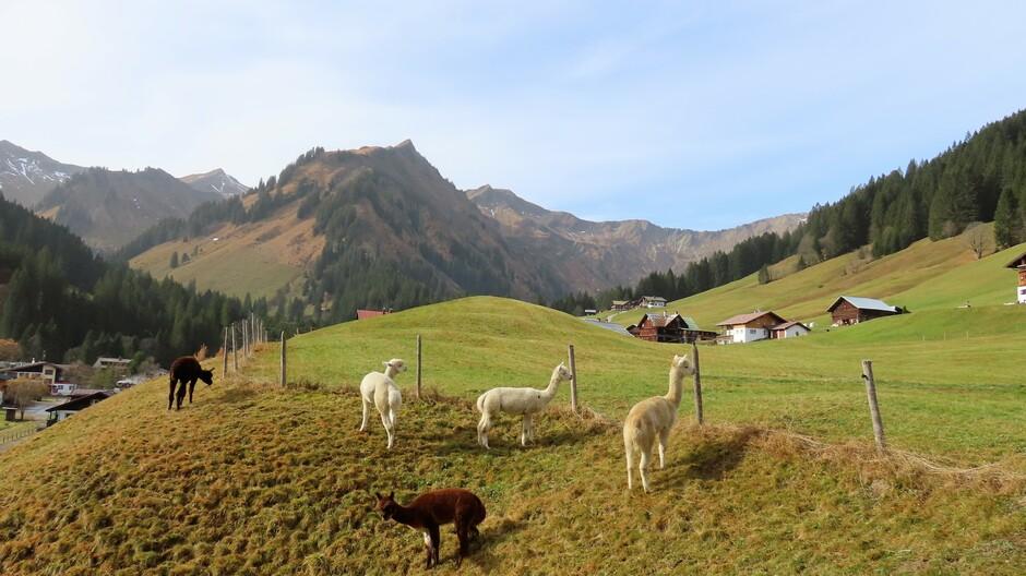 Alpen; vrij veel zon