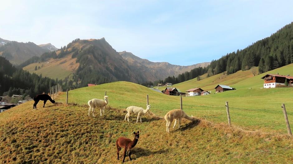 Alpen: vrij zonnig (dalen mist)