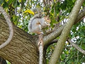 Squirreling Food